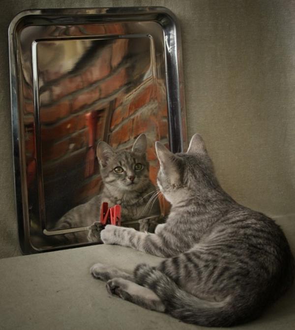 Belles images de chats page 17 for Miroir mon beau miroir dis moi