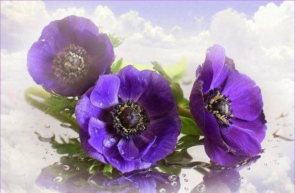 http://tchounette.t.c.pic.centerblog.net/3215888977_1_2_nz8vqk4V.jpg