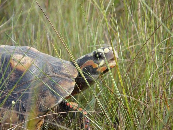 Les tortues. A341e093