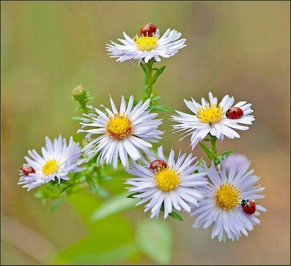http://tchounette.t.c.pic.centerblog.net/c679556b.jpg