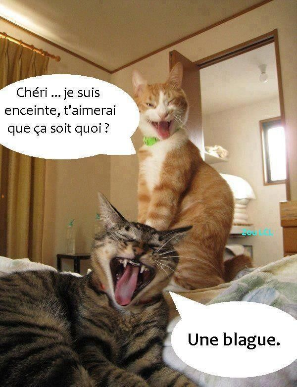 Humour divers - Photo chat marrant ...